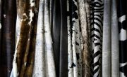 Using a Cowhide Rug In Your Living Room